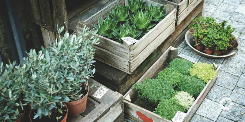 Progettare un orto ordinato e organizzato